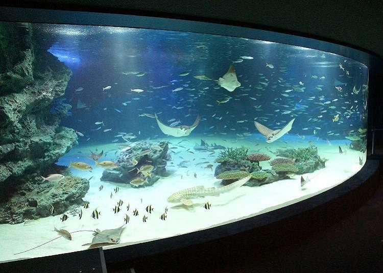 魚やアシカのパフォーマンスが見どころ