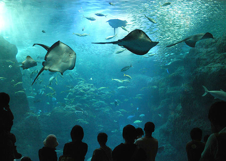 Enoshima Aquarium is a Popular Relaxation Spot