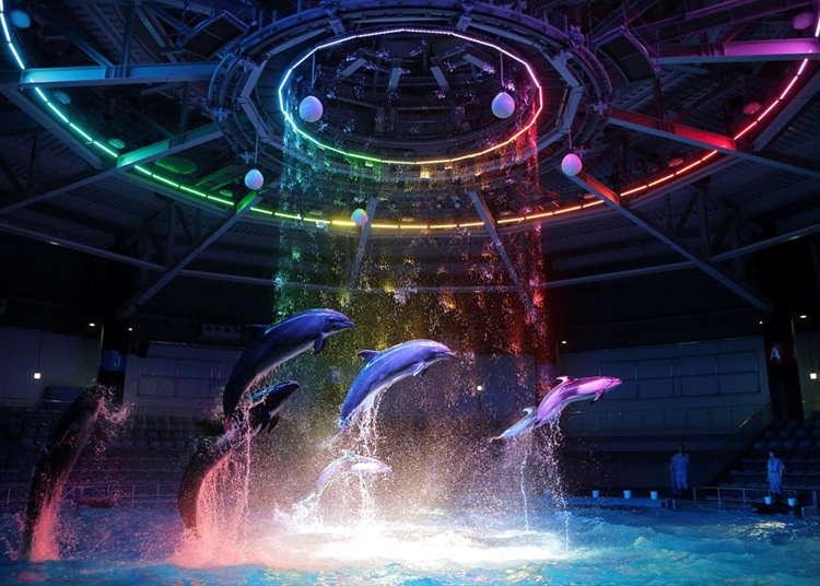 感動人心的海豚表演!