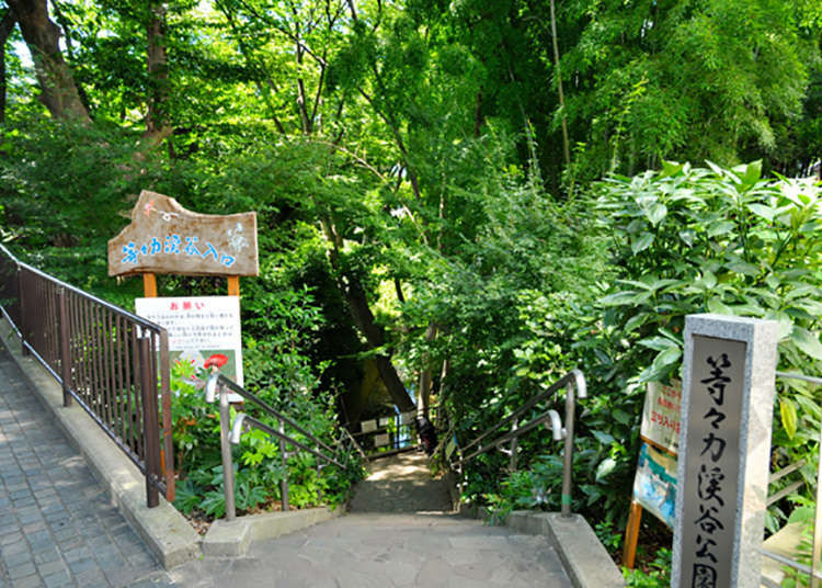 Tokyo's Only Ravine, a Rare Natural Spot
