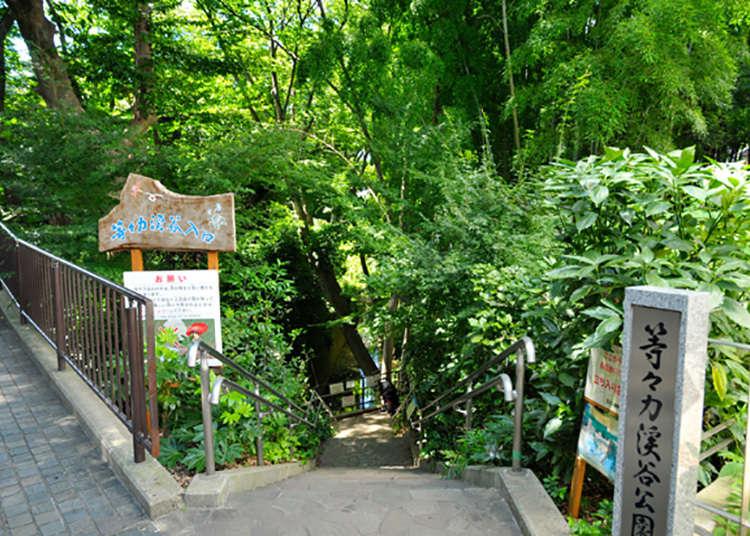 东京都内唯一的溪谷!稀有的自然景点