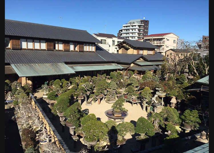 Dunia bonsai yang mempunyai makna mendalam