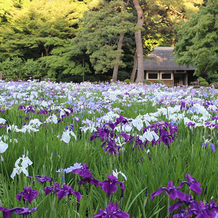 4. Koishikawa Kōrakuen Gardens