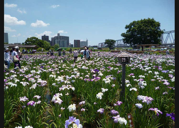 สวนโคอิวะโชบุเอ็น