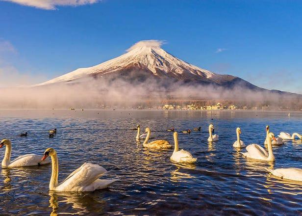 ภูมิศาสตร์และประชากรของญี่ปุ่น