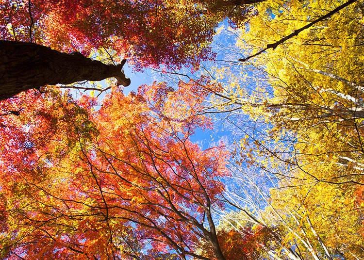 秋季的公众假期
