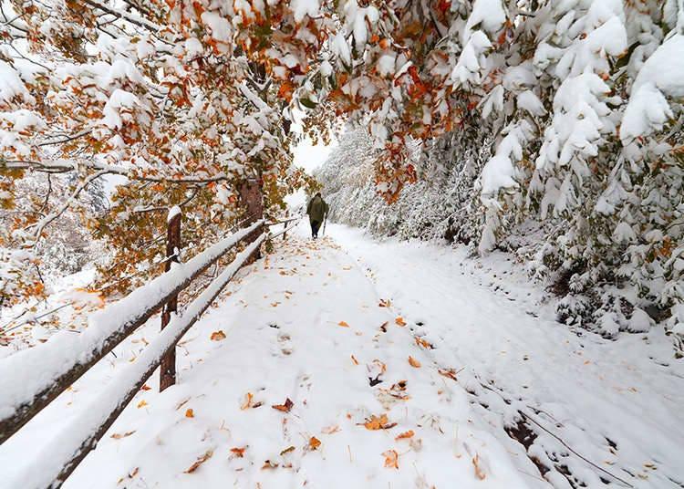What's it like in Japan's Winter Season?