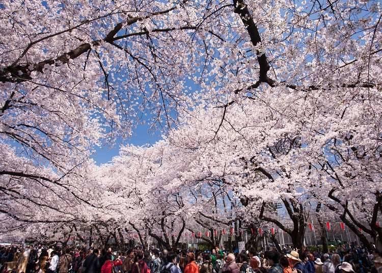 Overview of Asakusa and Ueno