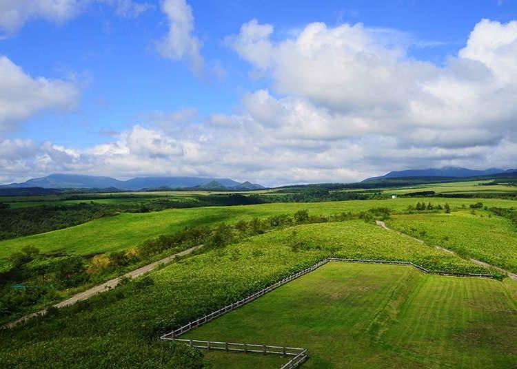 홋카이도 : 도산코의 토지