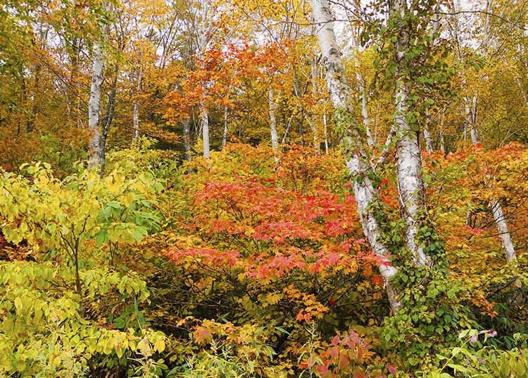 Jepang, Negara Hutan