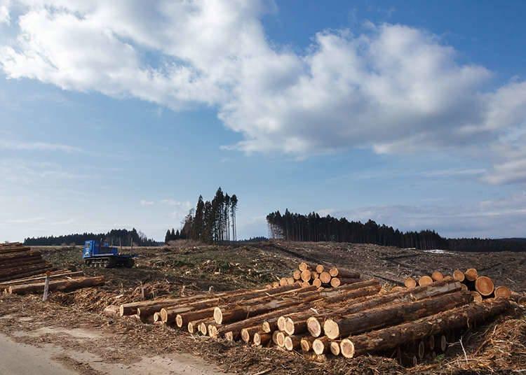 林業がブーム