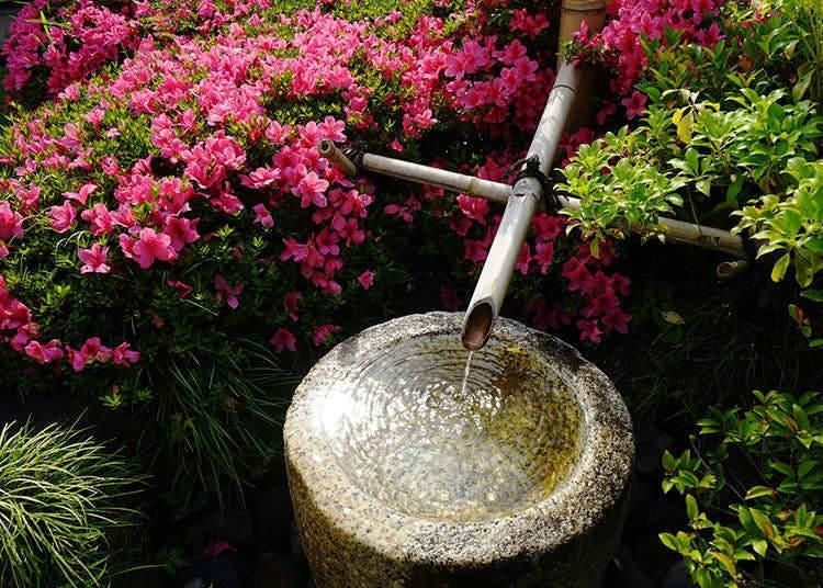 Tea garden (Roji)