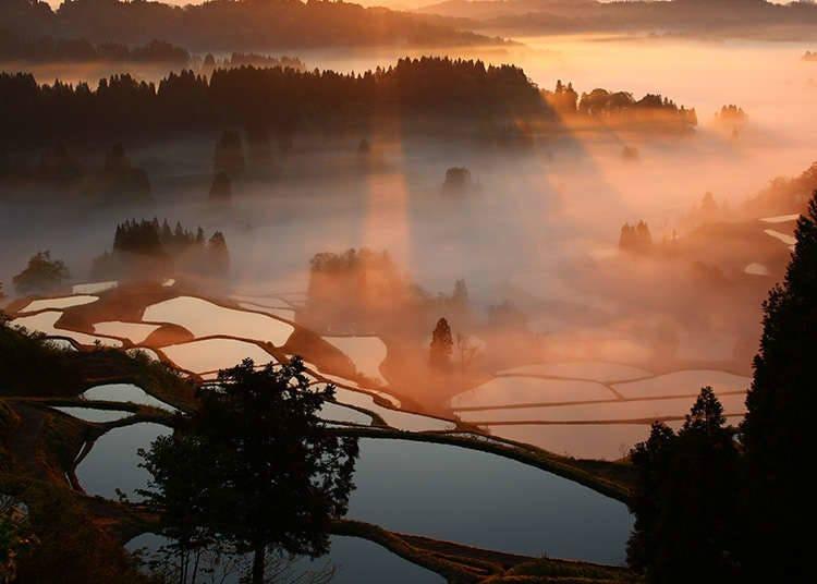 Pemandangan tumbuhan asli di Jepun