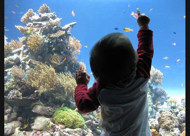 Menghidupkan suasana semula jadi laut