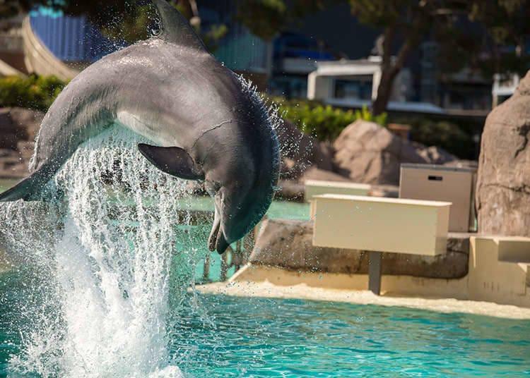 Boleh menonton persembahan ikan lumba-lumba dan singa laut