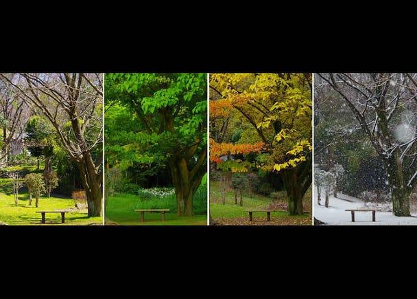 Empat Musim di Jepang