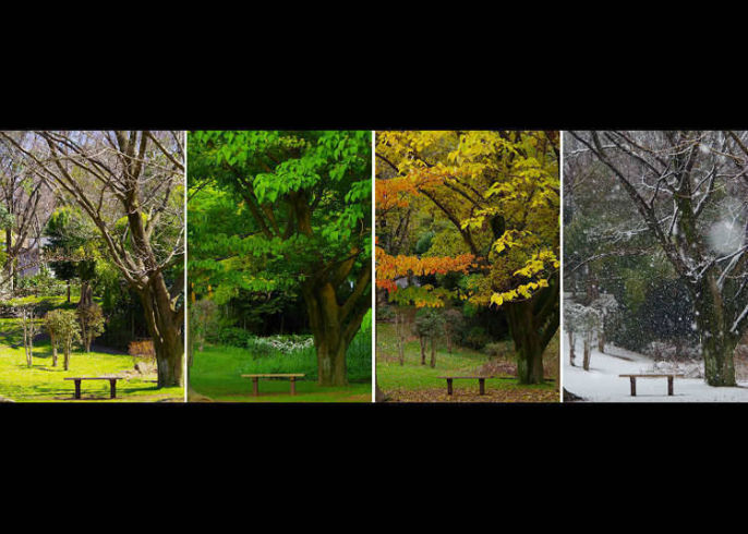 Suasana Empat Musim Di Jepang Live Japan Jepang Perjalanan Dan Pariwisata Pemandu