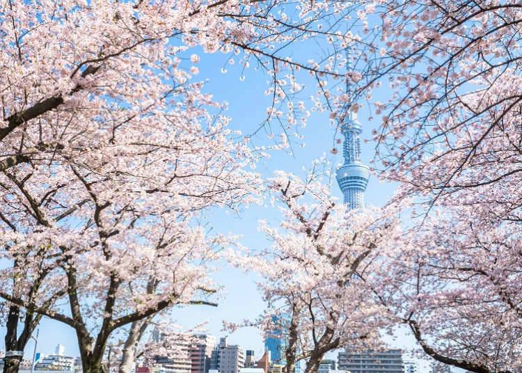 봄의 이벤트