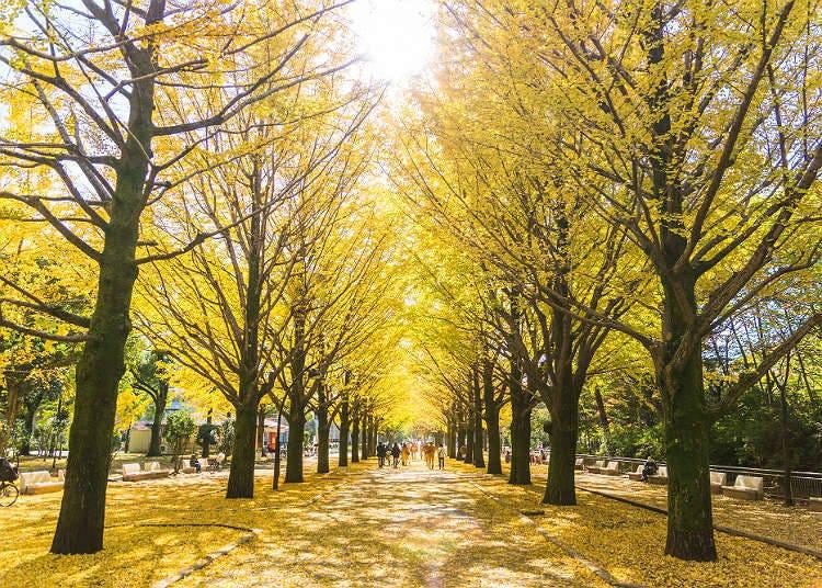 가을의 이벤트