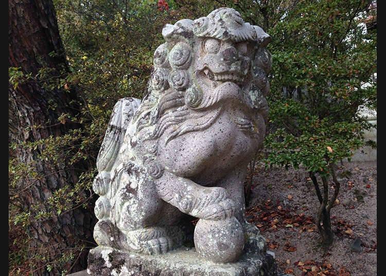 神明的守护兽--狮子狗