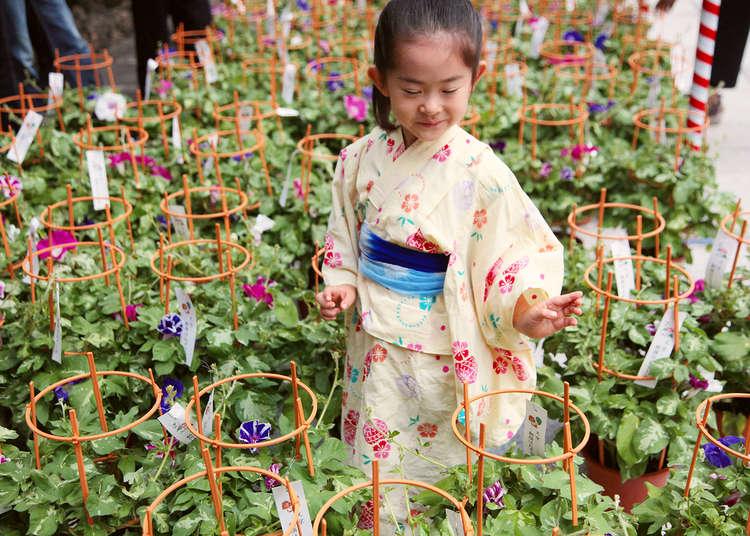 Ingin Melihat Bunga Musim Panas di Tokyo? Kunjungi Pasar Bunga Morning Glory dan Pasar Bunga Lampion Khas Musim Panas Berikut Ini!