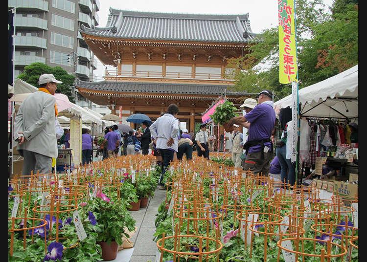 2. The Bunkyo Asagao Market (July 20-21)