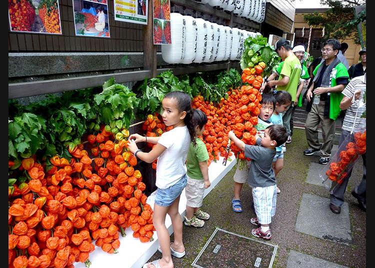 6. The Hozuki Market at Asahi Shrine (July 5-6)
