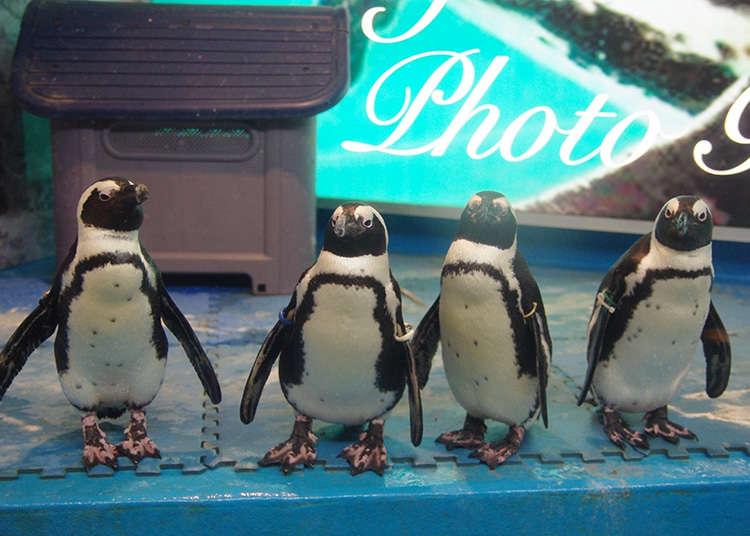 有企鹅的酒吧