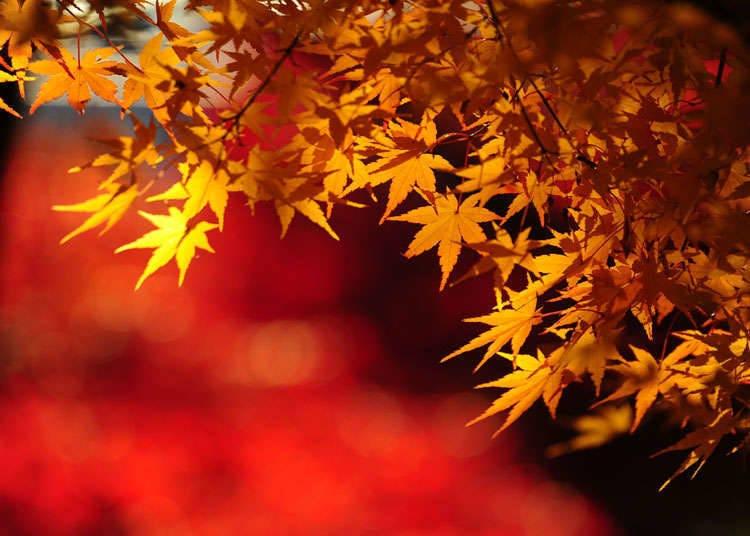 มรดกโลกของญี่ปุ่นที่ได้รับความนิยมในคนญี่ปุ่น