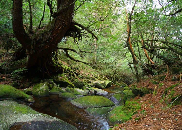 观光世界自然遗产的要点与规则