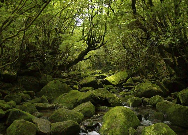 自然遗产的森林