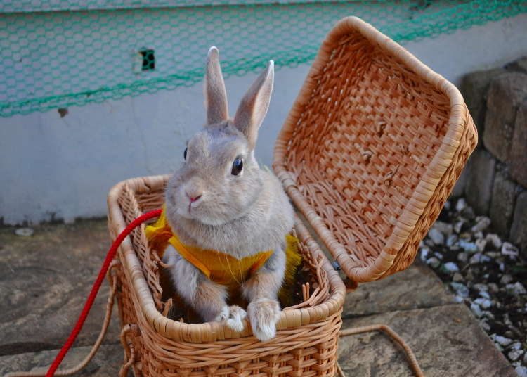 [MOVIE] สวนสนุกที่เล่นกับกระต่ายได้ที่อาซากุสะ!