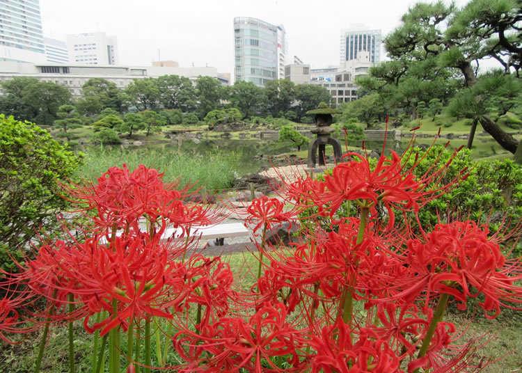 回遊式庭園に彩りを添える彼岸花