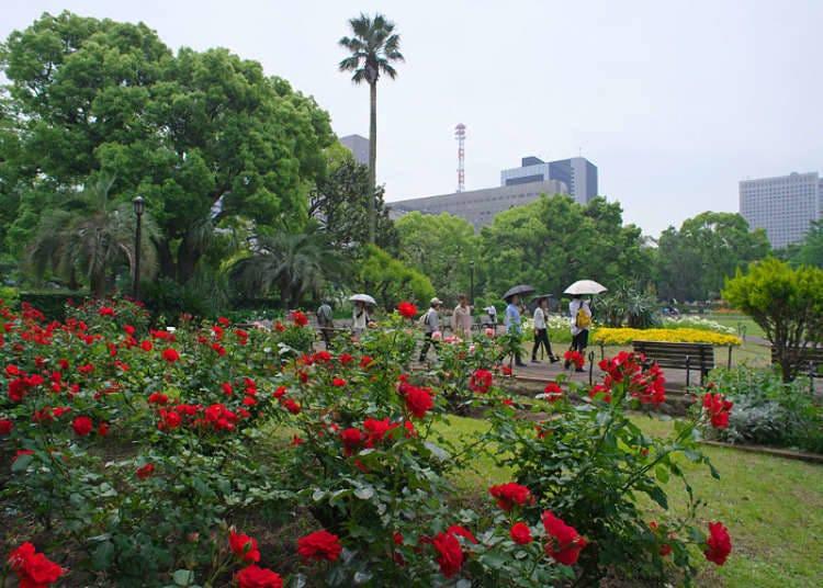 Bunga ros mewarnai oasis di kawasan perniagaan