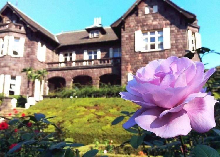 Pemandangan memukau bangunan lama Eropah dan keindahan bunga ros