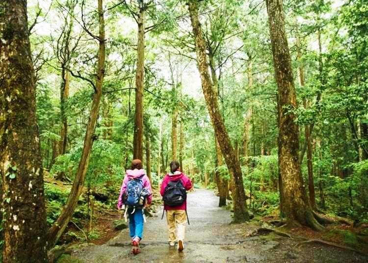 富士山の秘境!溶岩洞窟と青木ヶ原樹海を巡るおすすめ散策コース