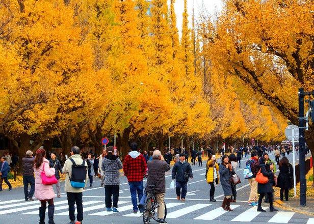 2021東京14處賞楓、銀杏景點+歷年最佳賞楓期大公開