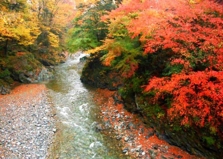 12. Hikawa Valley: Taking an Autumn Stroll along a Clear Stream