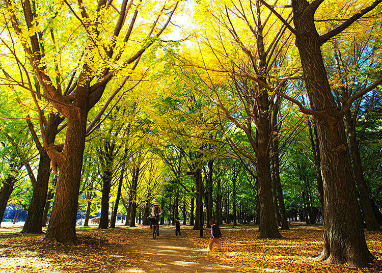 10. Yoyogi Park: A Colorful Contrast of Yellow and Red