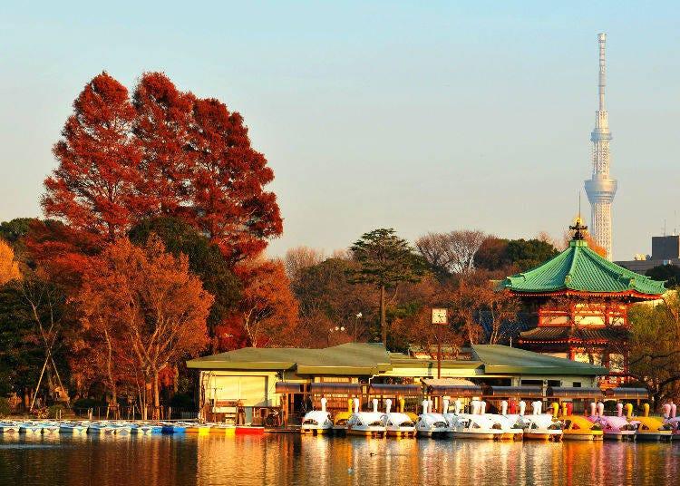 2. Ueno Park: A Spacious Grove of Autumn Leaves