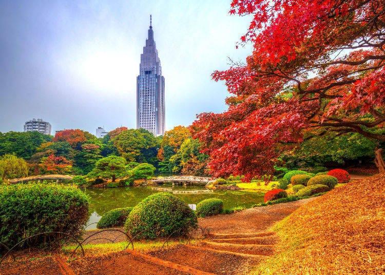 4. Shinjuku Gyoen National Garden: Experience Autumn in Three Unique Gardens