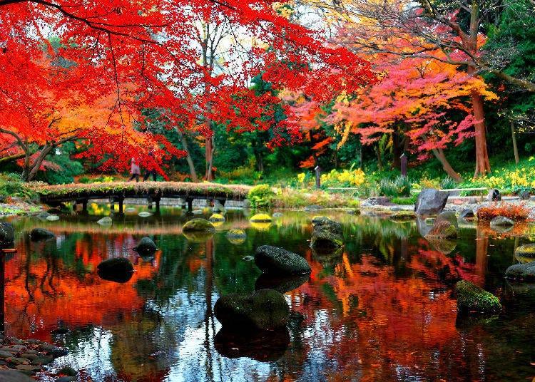6. Koishikawa Korakuen Gardens: An Exceptional and Traditional Autumn Scenery