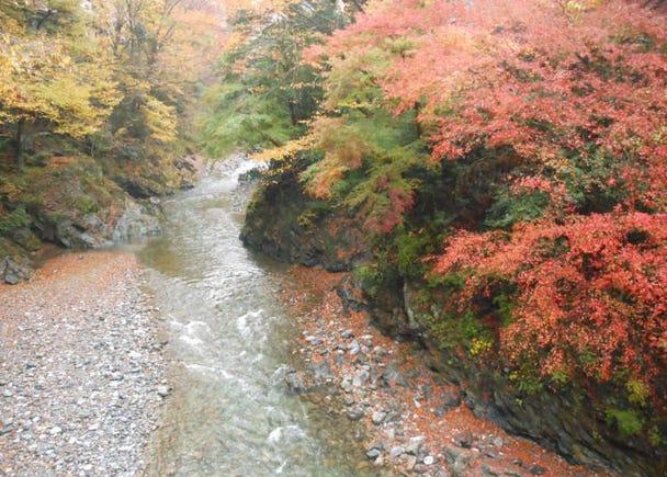 清流と紅葉を愛でるウォーキングが楽しめる【氷川渓谷】