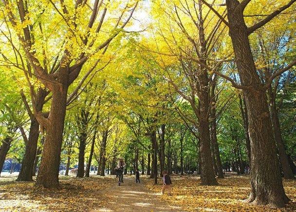 黄と赤の鮮やかなコントラストがお見事【代々木公園】