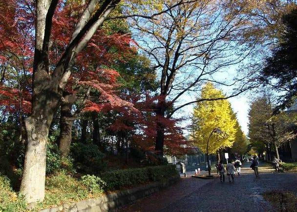 広大な敷地で色とりどりの紅葉を楽しむなら【上野恩賜公園】