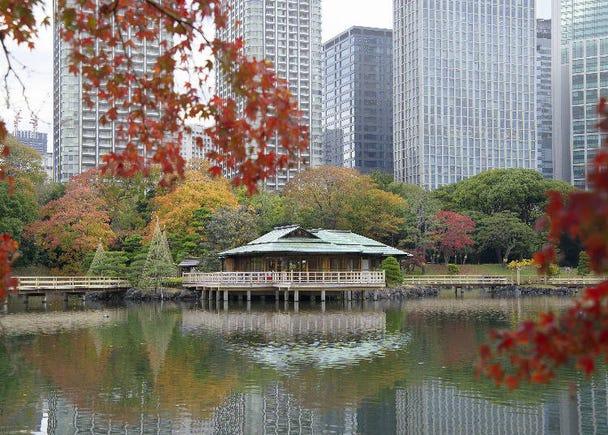 高層ビル群の中に映える美しい紅葉スポット【浜離宮恩賜庭園】