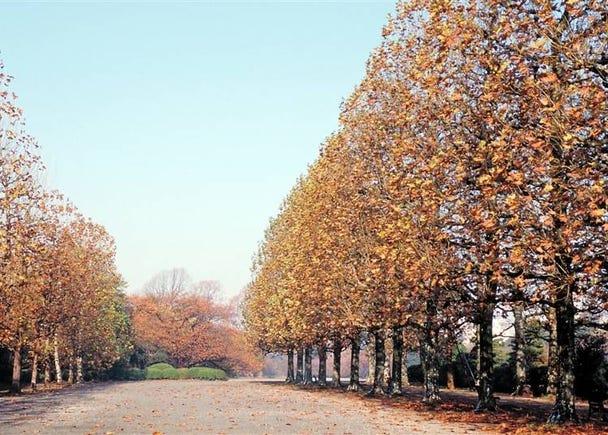 3つの異なる庭園で紅葉が楽しめる【新宿御苑】