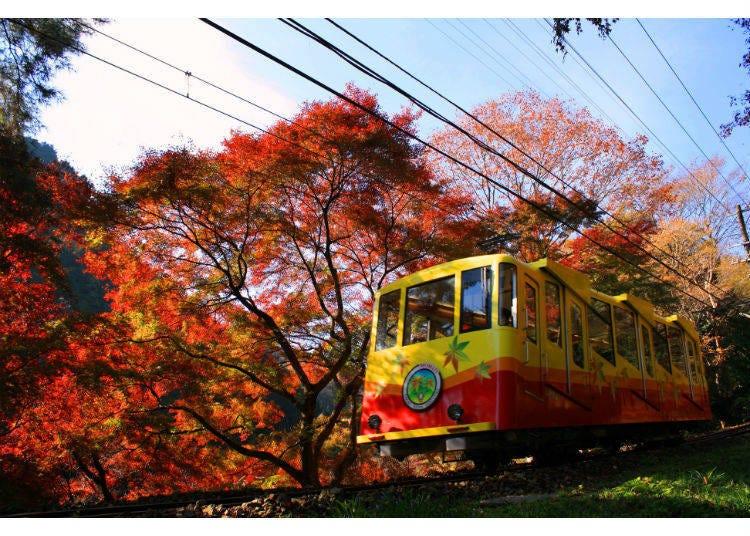 鮮やかな紅葉のトンネル【高尾山】