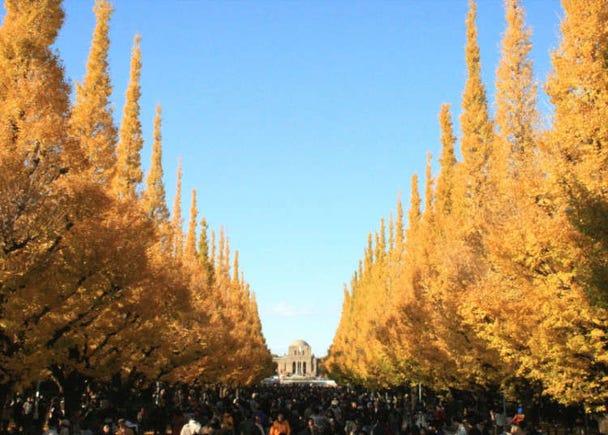 绵延300米的金黄色银杏大道