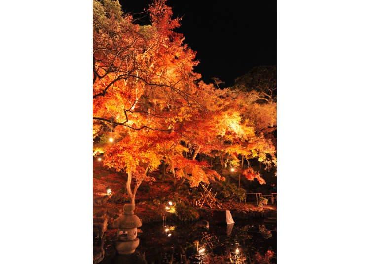 東京賞楓景點⑦紅葉季節必去的古寺巡禮「長谷寺」
